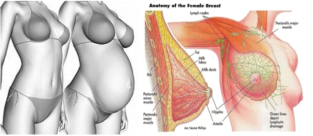 Breast Pain When Pregnant